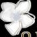 Profile picture of Oleander Floral